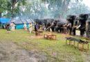 MP के इस पार्क में हाथियों की अनूठी पिकनिक, पहले मालिश फिर स्नान के बाद खिलाए जा रहे हैं रसीले फल
