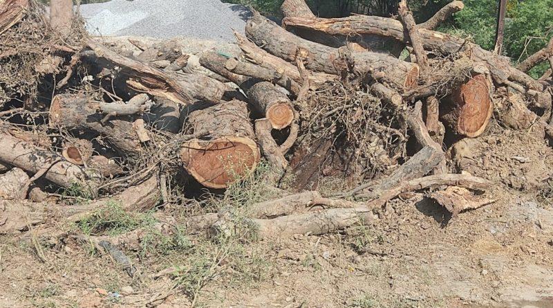 लहार दबोह NH 552 के निर्माता ठेकेदार ने दिखाई तानाशाही सड़क किनारे खड़े हरे पेड़ों को बगैर अनुमति के काटा प्रशासन मौन
